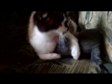 Video_Vitali_Grents
