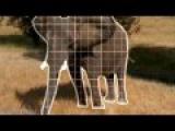 X-Mode - В Мире Животных (Animals)