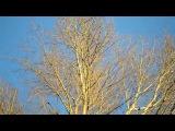 4. Весна  Франц Шуберт - Вальс цветов  Голубое небо