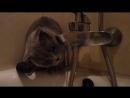 1 марта - всемирный день кошек ! моя котяра передает всем привет 😇🐈😂👍