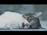 Очень трогательная истрория про кота!Любите кошек!Смотреть всем это видео тронет ваше сердце!