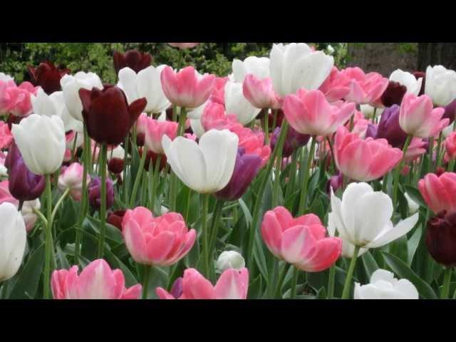 Любимые цветы... Джoвaннu Мaрpaдu. Giovanni Marradi - Shаdоws.