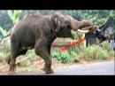 Слон убийца