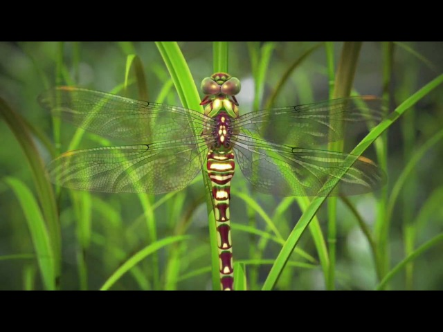 Nature by Numbers (Music Wim Mertens - Often a bird)
