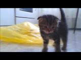 Мой смешной кот / My funny cat