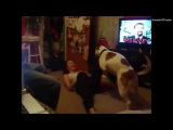 ���� � ������ � ��������� �������� �� 2014 A Girl and her Dog   Compilation 2014