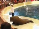 Seal Dancing on Michael Jackson Song - Blixtech