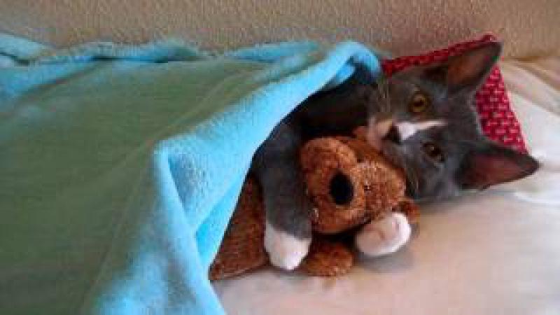 Cute Kitten Hugs His Teddy Bear (with Music) » Freewka.com - Смотреть онлайн в хорощем качестве