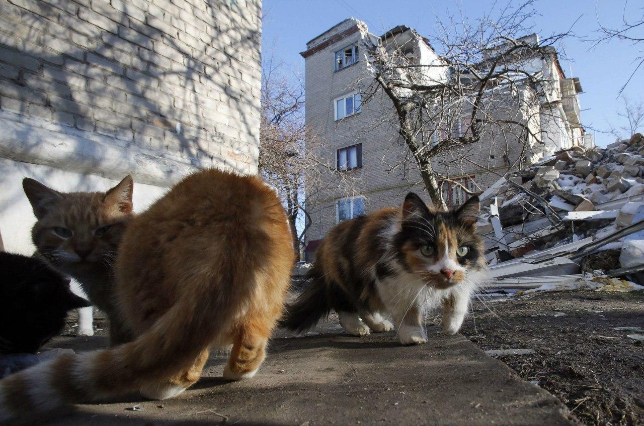 Коты Докучаевска