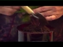 Бальзамин Советы по выращиванию