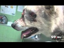 В упор расстрелял собаку