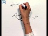 Art и факты. Кто как ходит   http://vk.com/utronovoe