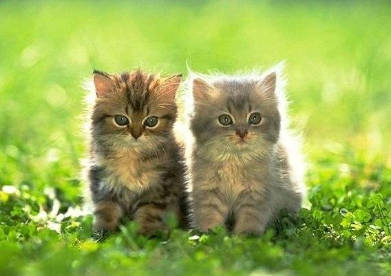 Фото кошки на аву стим - ba