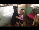 София и её доберман Тайсон))) Собака и ребенок