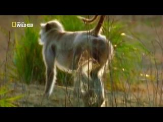 Самые опасные животные_ Высшие хищники (2010)