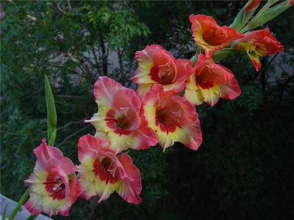 Цветы на длинных стеблях
