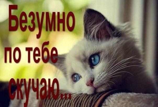 http://cs623816.vk.me/v623816508/142d8/JeN80dLemDE.jpg