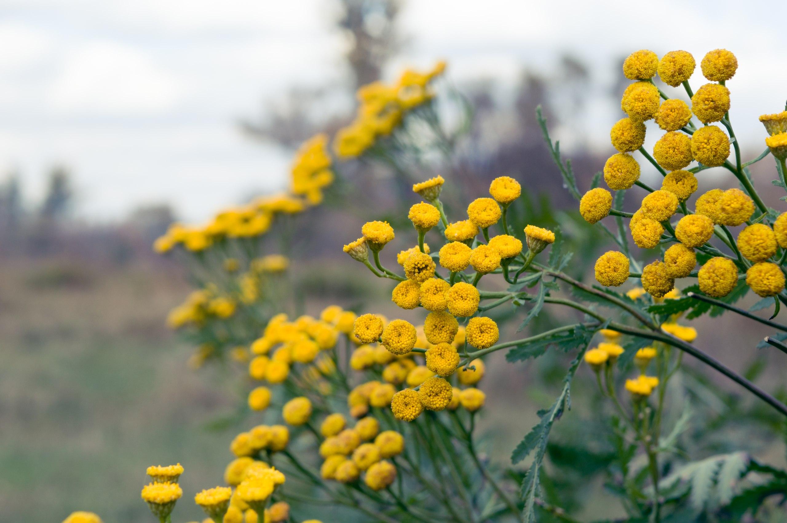 желтые цветы фото с названиями полевые пытались сделать фото
