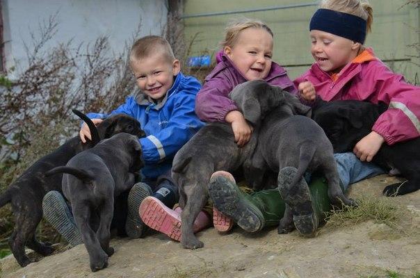 Это надо знать! ИНТЕРЕСНЫЕ факты о собаках S7-NBRIij_U