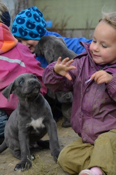 Это надо знать! ИНТЕРЕСНЫЕ факты о собаках UOuxsvWvk2M