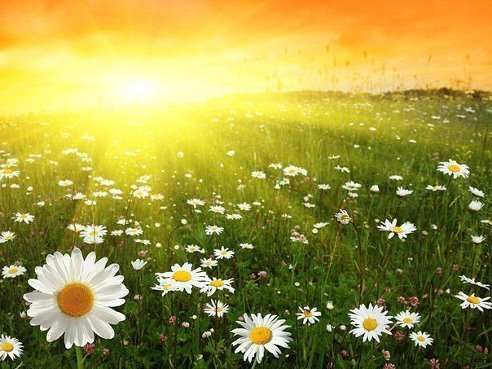 Солнце и питание