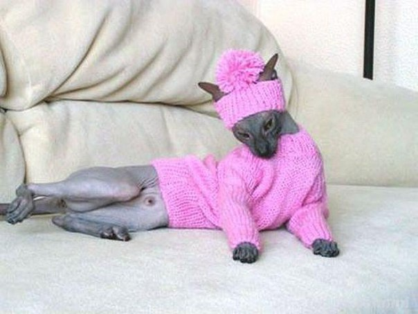 Вязание для кошкам