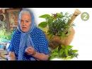Зайцева Е Ф Полный цикл бесед О ЛЕЧЕНИИ ТРАВАМИ Фильм 2 из 8