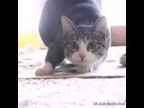 Диско-кот. Вигу-вигу-вигу.