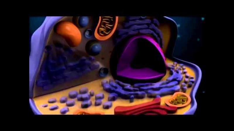 Структура клетки (эукариоты и прокариоты)