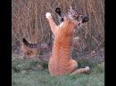 Игры без правил для кошек Прикольное видео про кошек Приколы с кошками Funny cats compilation