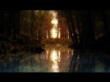 Лесная речка / Живые обои / Видеообои