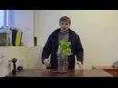 Гидропоника из подручных материалов. Все просто ! hydroponics