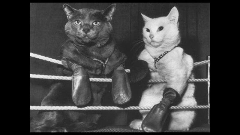 Cat vs Dog Real boxing