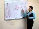 Кручинина М Работа иммунитета и Трансфер фактор
