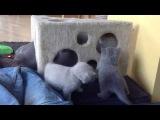 смешное видео о котятах