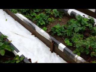 CanHelpYou  Как сделать правильный и современный огород  mp4