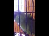 Как чирикает попугай, после того, как дома появился ребенок