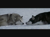 «Белый плен»-Nightwish