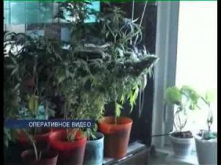 Мама думала, что примерный сын увлекается ботаникой, а он разводил в квартире марихуану