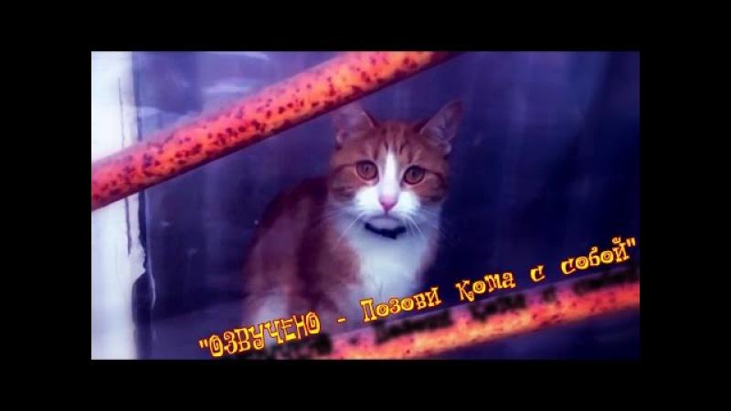 ILUMILAND Позови кота с собой