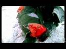 Супер клип из К/Ф бригада! Реп Нагора- Брат за Бра