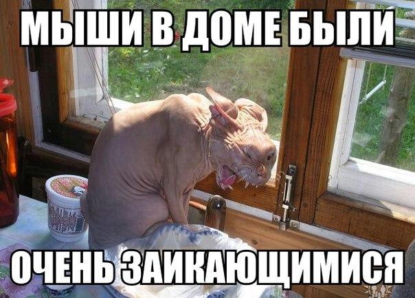http://cs623824.vk.me/v623824339/3aef6/OGVeO1AzgHk.jpg