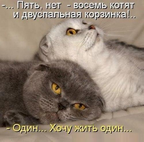http://cs623824.vk.me/v623824339/3b5c7/nkjRUpM1_7A.jpg