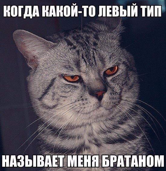 http://cs623824.vk.me/v623824339/3c205/Pvv_vmvEQc4.jpg