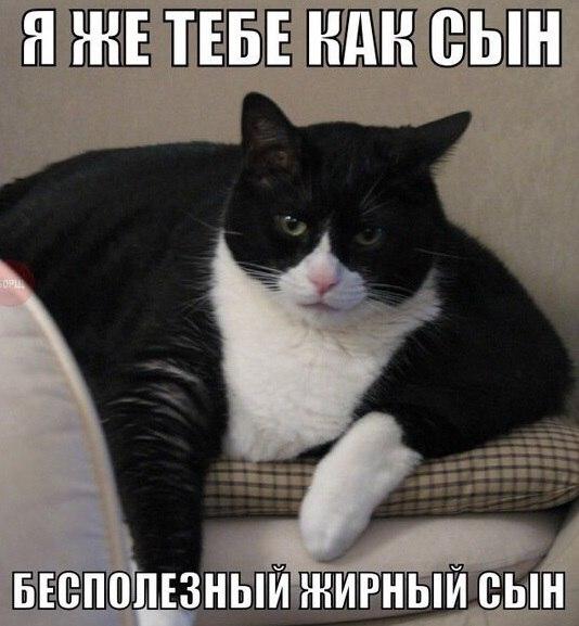 http://cs623824.vk.me/v623824339/3c907/cPgtBgotNec.jpg