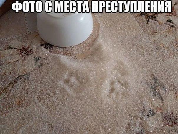 http://cs623824.vk.me/v623824339/3c90e/mpIqeJ00ufU.jpg