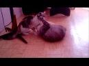 котодрака девки дерутся кошки дерутся