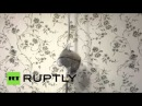 Russia: This poledancing slow loris may be the cutest thing you'll see all day!