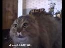 Приколы с кошками.Говорящий кот