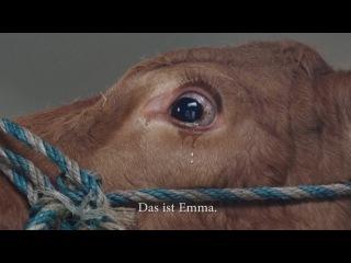 История коровы Эммы.  Её везли на забой, а она всю дорогу плакала от страха и ужаса - животные всё чувствуют!
